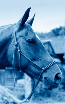 Natural leadership with your horse